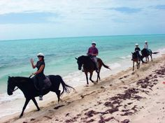 A chance to ride along a beautiful beach in the Turks and Caicos islands? Yes please! Let's visit Provo Ponies to gallop on the sand in Providenciales.