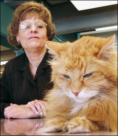 Dewey the library cat, with his savior and biographer, Vicki Myron.  Dewey has left us, but he's immortalized in Vicki's book.