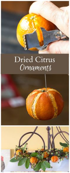 *With directions* - Learn how to make pretty dried citrus ornaments to embellish your wreaths and to hang on your Christmas tree this holiday season. These Christmas ornaments are easy to make and their natural beauty really shines. Diy Christmas Ornaments, Homemade Christmas, Christmas Projects, Holiday Crafts, Christmas Wreaths, Christmas Decorations, Christmas Tree Easy, Beaded Ornaments, Felt Christmas