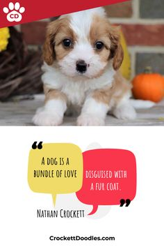 A dog is a bundle of love disguised with a fur coat. Nathan Crockett (founder of Crockett Doodles) Cavapoo pictured Who can resist a puppy? Look at these guys and put a smile on your face. Funny Animal Memes, Cute Funny Animals, Cute Baby Animals, Funny Dogs, Animals And Pets, Cute Cats, Cute Puppies, Dogs And Puppies, Teacup Puppies