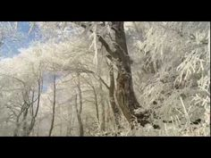 ▶ 12 hrs. Soft Music - Winter Scenes - Relaxation Meditation Study Reading - Snow but no shoveling! - YouTube