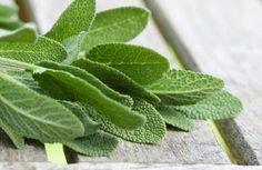Salvia: come fare il potente infuso naturale che sgonfia il tuo addome in 20 minuti | TuttiVip Salvia Officinalis, Nutrition, Kraut, Food Art, Planting Flowers, Herbalism, Detox, Plant Leaves, The Cure
