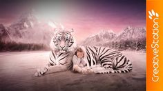 Tiger's Sweetness - Speed art (#Photoshop) | CreativeStation