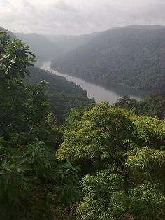 Sharavati Wildlife Sanctuary at Sagar Taluk, Karnataka. It is 350 km from Bangalore. Located near Jog Falls, the sanctuary covers the Sharavati Valley Region, near the western border of Karnataka. #sagara #holiday #karnataka #homestay #hotel #wildlife #greenery #india