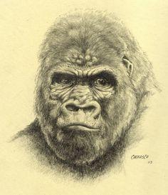drawings of gorillas in journal | Gorilla drawing by MANu1