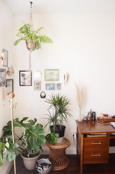 The plants in Lorena's bedroom are from local garden shops and farmer's markets.