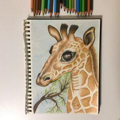 Giraffe drawing using colored pencil