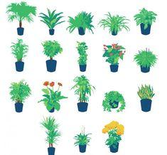 Pestujete niektorú z nich aj vy? Plants, Plant, Planets