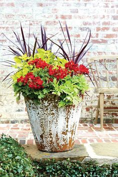108 Container Gardening Ideas: Geraniums Built for the South