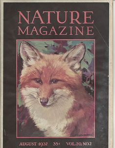 1932 Nature Complete Magazine Red Fox Cover Art by Bruce Hornsfall |