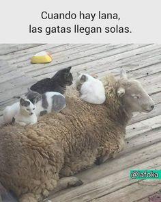 Memes Estúpidos, Funny Memes, Kawaii, Marceline, Itachi, Animal Memes, Kitty, Comics, Cats