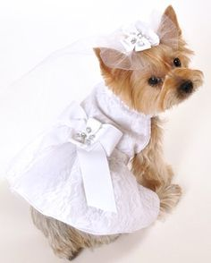 I See Spot's Satin and Lace Dog Pet Wedding Dress, White - http://www.thepuppy.org/i-see-spots-satin-and-lace-dog-pet-wedding-dress-white/