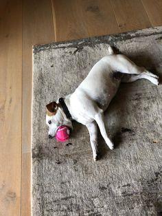 Stitch Movie, Dogs, Pet Dogs, Doggies
