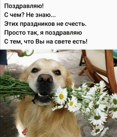 ПРИЧАЛ МОЕЙ ДУШИ — НАСТРОЕНИЕ В КАРТИНКАХ | OK.RU Animals And Pets, Funny Animals, Funny Good Morning Images, Montreal Botanical Garden, Biblical Verses, Christmas Pictures, Positive Thoughts, Labrador Retriever, Positivity