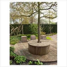 decking around trees to cover roots and provide extra seating