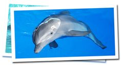 Winter & Dolphin Tale