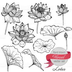Illustration of Vector set of hand drawn lotus flowers and leaves. Sketch floral botany collection in graphic black and white style vector art, clipart and stock vectors. Lotus Drawing, Drawing Hands, Plant Drawing, Drawing Flowers, Floral Drawing, Lotus Art, Flower Drawings, Hand Drawn Flowers, Botanical Drawings