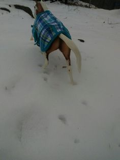 Duke running out in the snow
