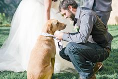 Sweet moment between the groom and his dog ring bearer | This Girl Nicole Photography via Bridal Musings