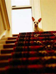 This week's dog training column: Why is my dog afraid of going up and down the stairs? (Ryan Mcvay  /  Getty Images stock)