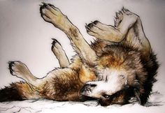 Wolf on his back                                                                                                                                                                                 More
