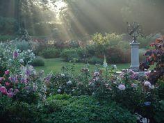 Morris Arboretum's rose garden at sunrise...exquisite