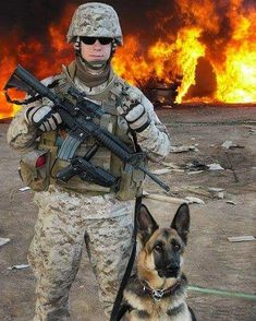 """It's so funny when people ask """" does your dog bite?"""" Ugh, yes, the moment she is told to do so. Military Working Dogs, Military Dogs, Military Service, Army Dogs, Police Dogs, Black Shepherd, Dog Soldiers, German Shepherd Puppies, German Shepherds"""