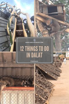 Discover 12 awesome things to do in #Dalat #Vietnam #travel	https://www.survivetravel.com/top-things-do-dalat-vietnam	Dalat Vietnam Things to do, Dalat Vietnam Travel, Dalat Vietnam Beautiful, Dalat Vietnam Pictures PIN THIS FOR LATER!