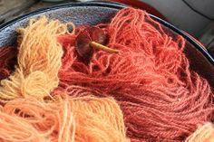 natural dye blog