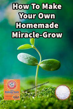 Homemade Plant Fertilizer, Home Made Fertilizer, Fertilizer For Plants, Garden Fertilizers, Pruning Fruit Trees, Trees To Plant, Planting Vegetables, Growing Vegetables, Veggies