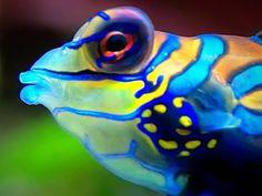 frog, fantast color