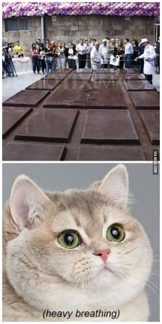 World's largest chocolate bar (4,410kg) (Featuring the Heavy Breathing cat)