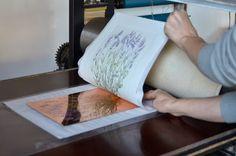 History of #lavender 4 #AdamPoltorak #copperplate
