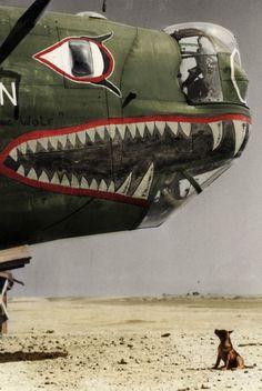 Italia, El avión con morro de escualo es un Liberator de la Fuerza Aérea. Aviones Segunda Guerra Mundial, Fotografía De Guerra, Helicopteros De Guerra, Vehículos Militares, Historia Militar, Arte Militar, Barcos, Arte De Nariz, Avion Planes