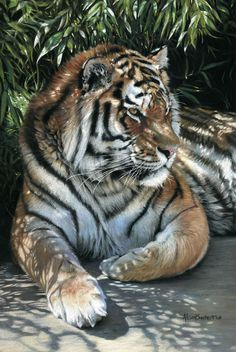 Alison Burchert (pastel) - WOW!!! -to be able to draw that shade shadowing the tiger!