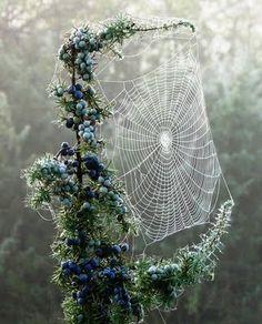 wonderful work by a spider