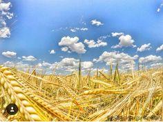 I have no words to describe this  Could you help me pleaseeee  Thanks for excellent photo @go2baranja  #croatiatips #croatia #croatiafullofnature #wanderland #wanderlust #traveladdict #travelpics #sharetravelpics #go2baranja #baranja #travelblogger #croatiablogger #blogger #fieldsofgold #perfectnature #natureporn #travelgram #instagramers #instatravel #instatrip #instago #instagreat #ourplanetdaily