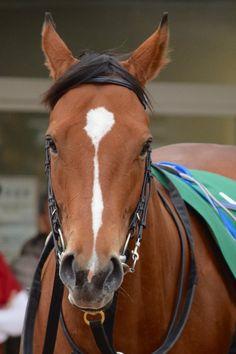 #Albiano 2016-03-05   中山11R オーシャンSパドック アルビアーノ(牝4) 510kg