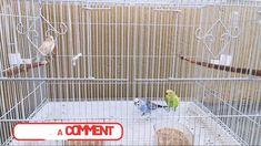 Canario y Periquitos Australianos Home Appliances, Happy, Parakeets, Canary Birds, Aussies, Pets, Hipster Stuff, House Appliances, Kitchen Appliances