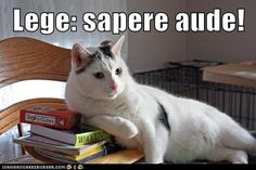 Bestiaria Latina Blog: Latin Proverbs and Fables Round-Up: November 11. Lege: sapere aude! Read: dare to know!