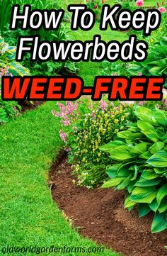 How to keep flower beds weed-free - all summer long!, How to keep flower beds weed-free all summer long ! # Landscaping weed Garden arrangement begins at the en. Garden Yard Ideas, Diy Garden, Landscaping Tips, Plants, Lawn Care, Outdoor Gardens, Flower Beds, Garden Planning, Garden Landscaping
