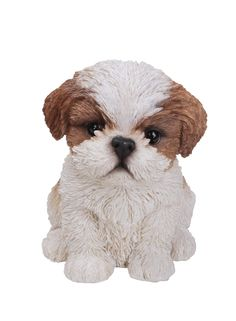 All Line Sitting Shih Tzu Puppy, Brown/White Shih Tzu Hund, Shih Tzu Puppy, Shih Tzus, Brown Shih Tzu, Pet Dogs, Dogs And Puppies, Havanese Puppies, Training Your Dog, Training Tips