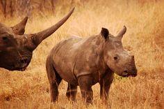 Sabi Sabi Private Game Reserve, South Africa