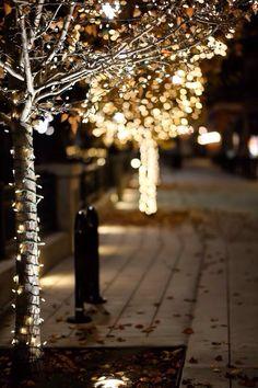 #Outdoor tree #fairylights