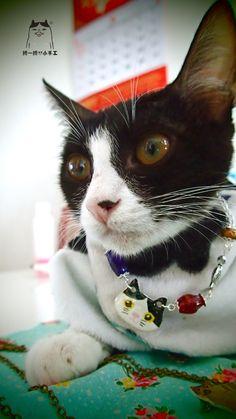 畢幸不幸轉轉轉: 【貓奴專用】古懂貓首飾