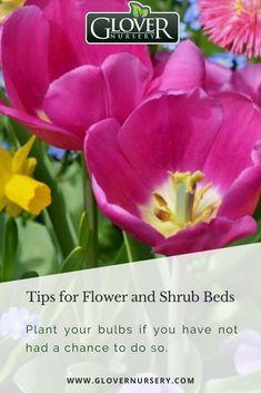52 Best Shrubs Images Plants