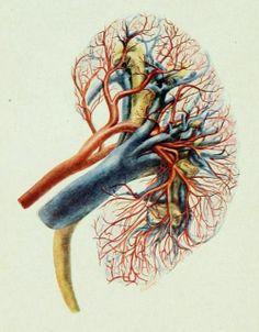 """Imagen del libro """"Genito-Urinary Diseases"""". Traducido por Charles W. Bonney y el Dr. Leopold Casper en 1912."""
