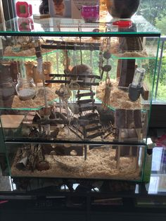 Hamster cage Hamster Habitat, Hamster Life, Hamster House, Hamster Stuff, Gerbil Toys, Gerbil Cages, Cute Rats, Cute Hamsters, Degu