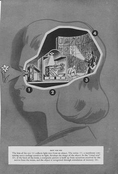 How You See - 1952 medical illustration for a general public health book.