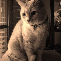 My amazing cat!